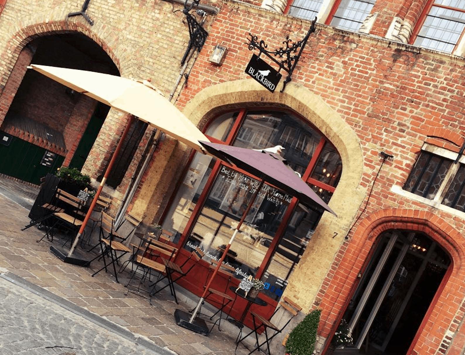 Blackbird in Brugge