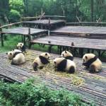 Vakantie naar China plannen