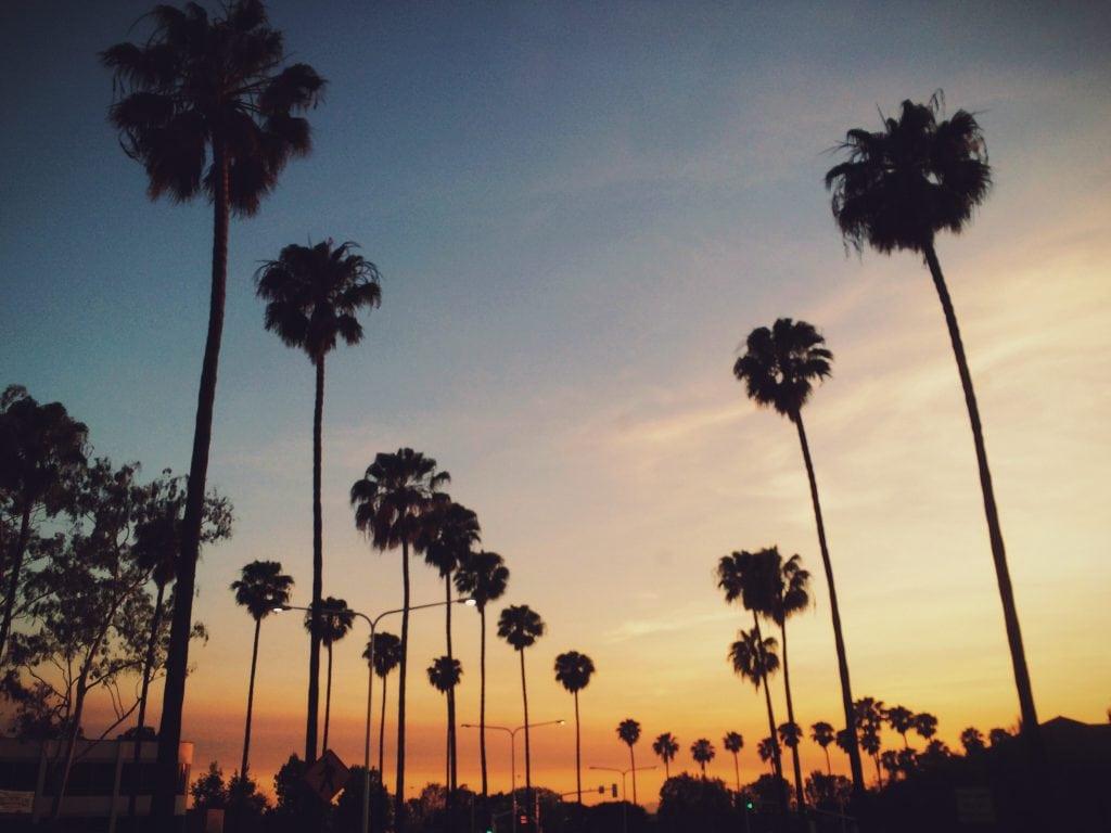 Los Angeles palmbomen